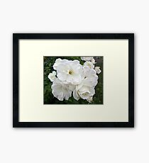Rain Drops on White Flowers Framed Print