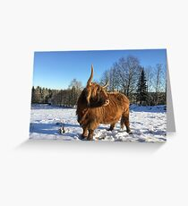 Scottish Highland Cattle Cow 1590 Greeting Card