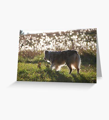 In Fields of Silk Greeting Card