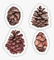 Beautiful pine cones Sticker