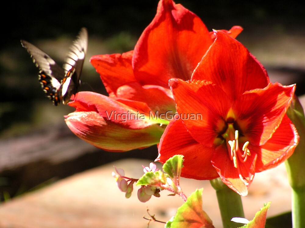 My first Butterfly by Virginia McGowan