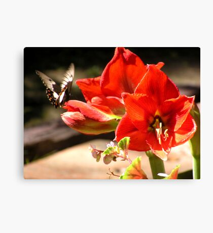 My first Butterfly Canvas Print