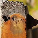 ocean art #55, rust on timber by stickelsimages