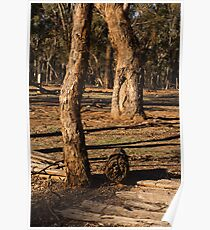 Barmah State Forest Red Gums Poster