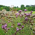 Thistles by Kat Simmons