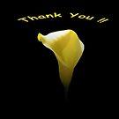 Thank You by Sean Jansen