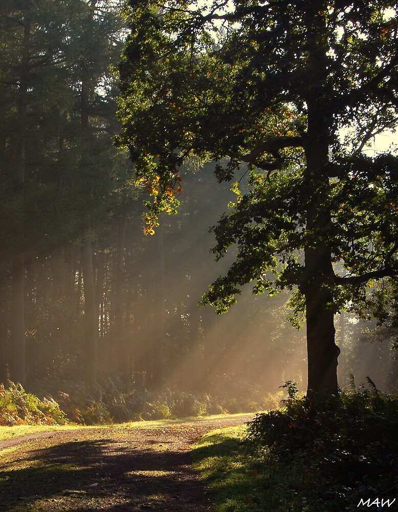 Morning Rays by MarkAWilliams