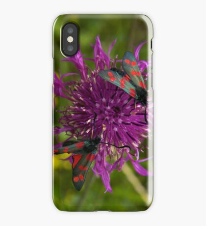 """Greater Knapweed with """"6-spot Burnet"""" Moths iPhone Case"""
