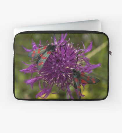 "Greater Knapweed with ""6-spot Burnet"" Moths Laptop Sleeve"