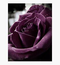 Purple Rose II Photographic Print