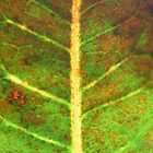 Leaf and Light by Rachael Martin