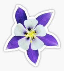 the beautiful columbine blossom Sticker