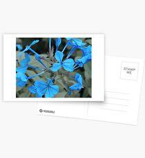 Blue flowers Postcards
