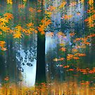 Echoes of Autumn by Jessica Jenney