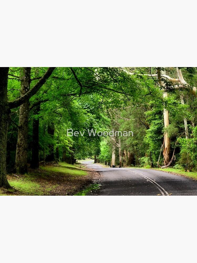The Avenue near Breenhold - Mt Wilson NSW Australia by BevW