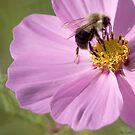 Wading in the Pollen by Mary Campbell