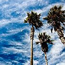 Palms in the Sky by Barbara  Brown