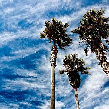 Palms in the Sky by lenzart