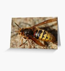 A wasp investigating for nectar Greeting Card