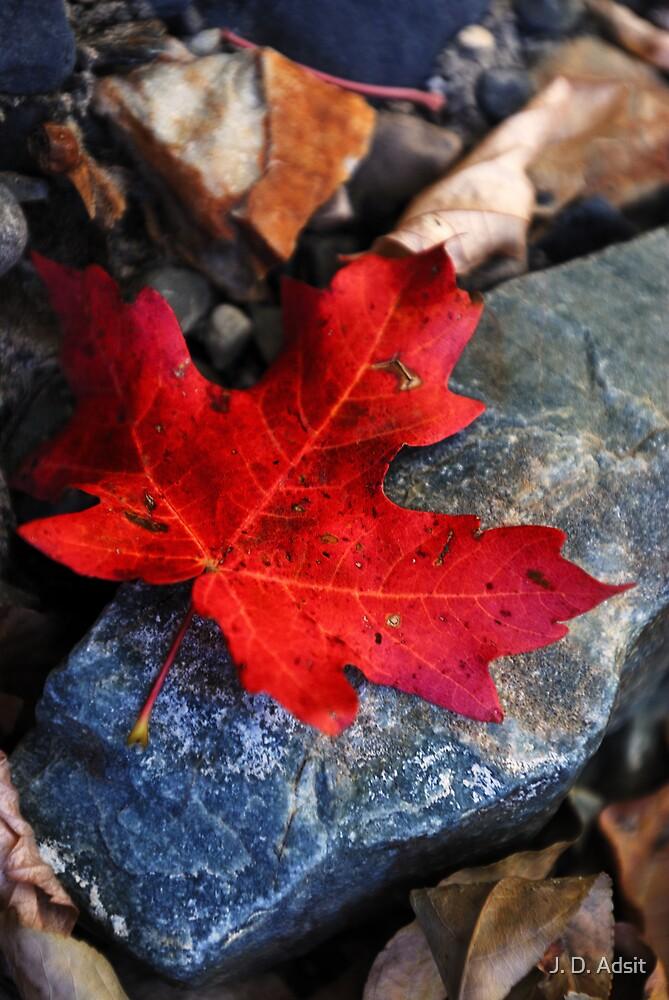 Autumn Leaf by J. D. Adsit