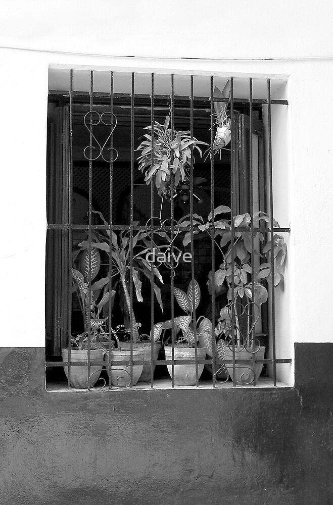Havana Window by daive