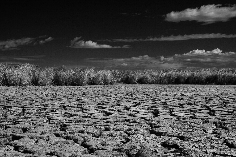 Dry by Laurie Search
