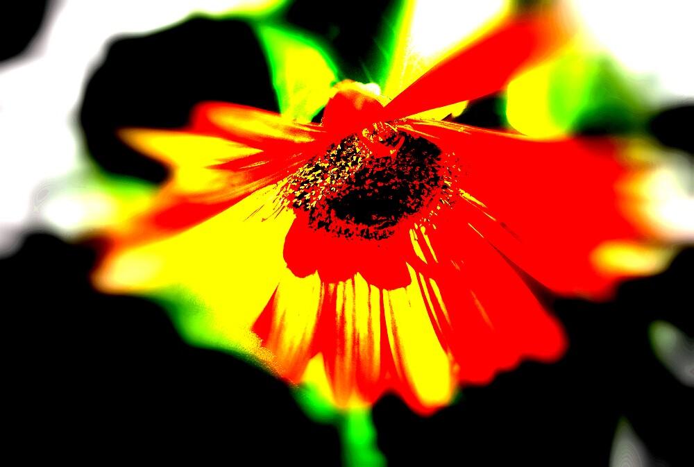 Modern Gerber Daisy by DottieDees