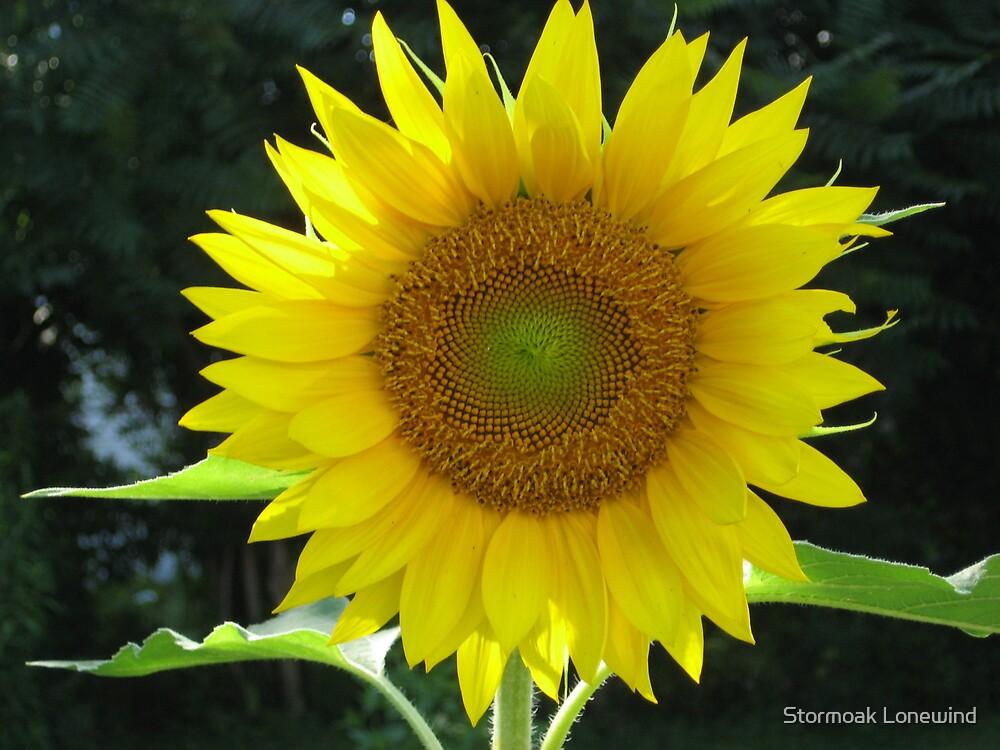Sunflower by Stormoak Lonewind