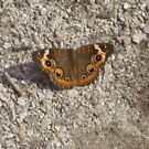 Butterfly At Franklin Park Zoo by Stormoak Lonewind