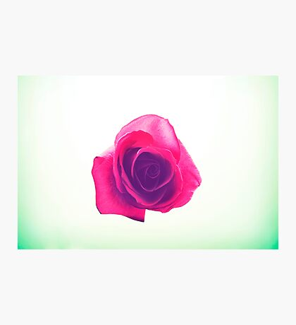 A Rose Photographic Print