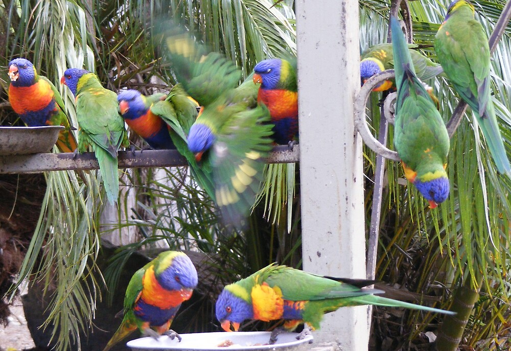colourful lorikeets - just hanging around too by gaylene