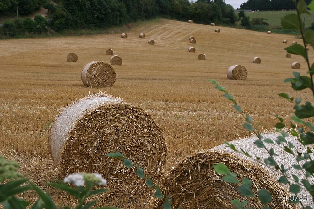 Hay making by Fran0723