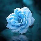 Blue Moon Rose by Rainy