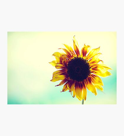 A Sunflower Photographic Print