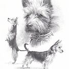 Australian terrier drawing by Mike Theuer