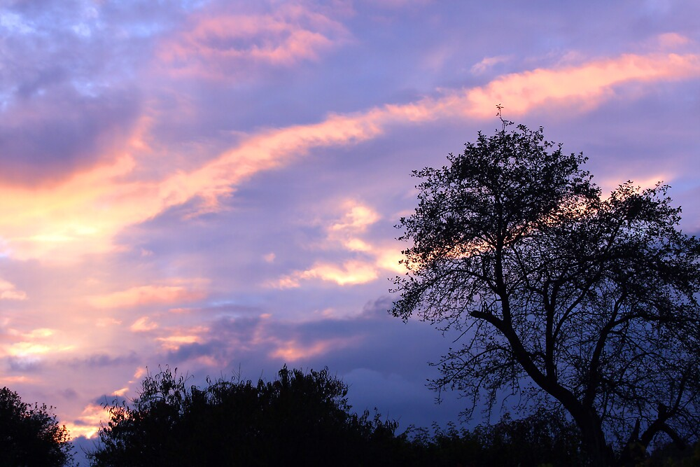 Apple Tree Sunset by denise romano