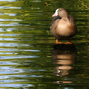 DUCKTAILS by mc27