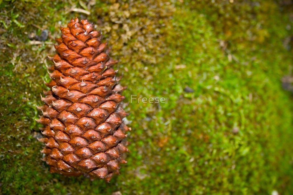 Pine Cone on Moss Carpet by Freese
