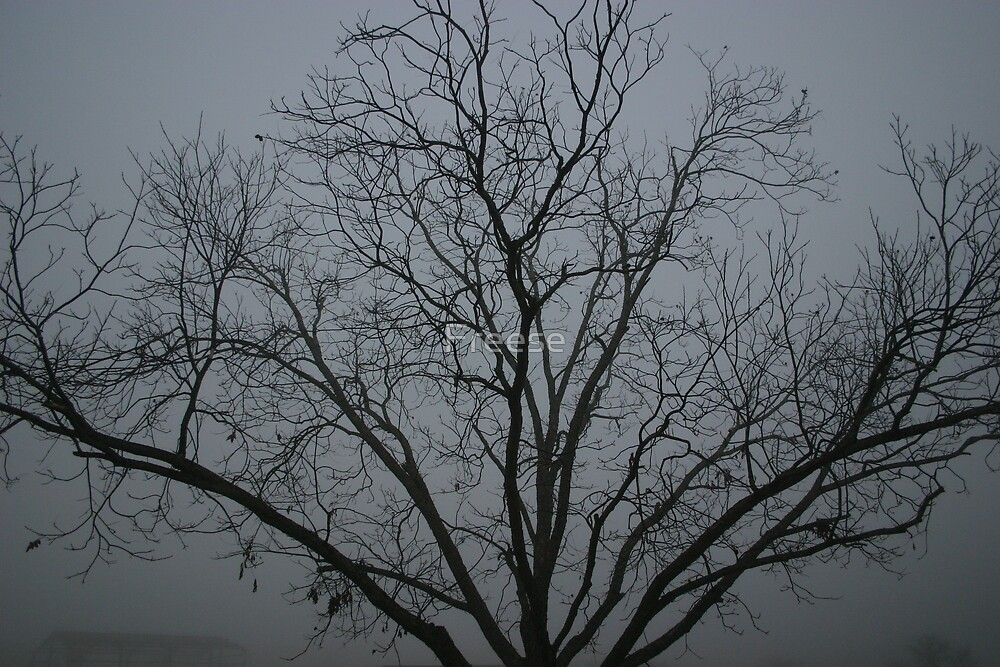 Misty Branch by Freese