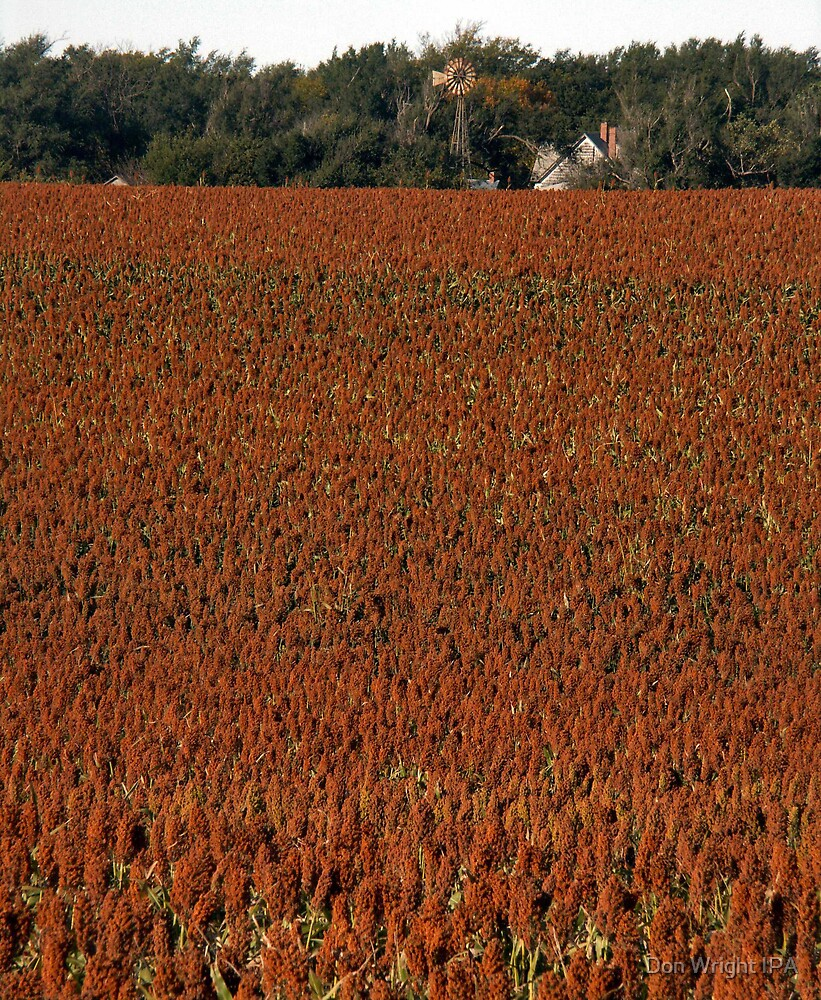 MILO -  The Crowning Beauty of Kansas in the Fall by Don Wright IPA