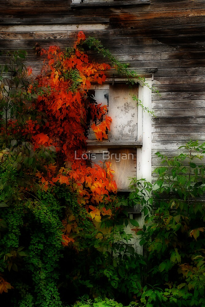 Broken by Lois  Bryan