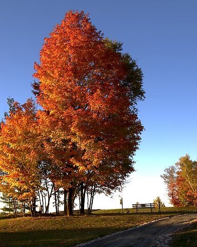 Elliot Lake Golf Course at it's best in the Fall by Bill Lacroix