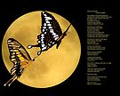 Butterflies Across the Shadows of the Moon by Mary Campbell