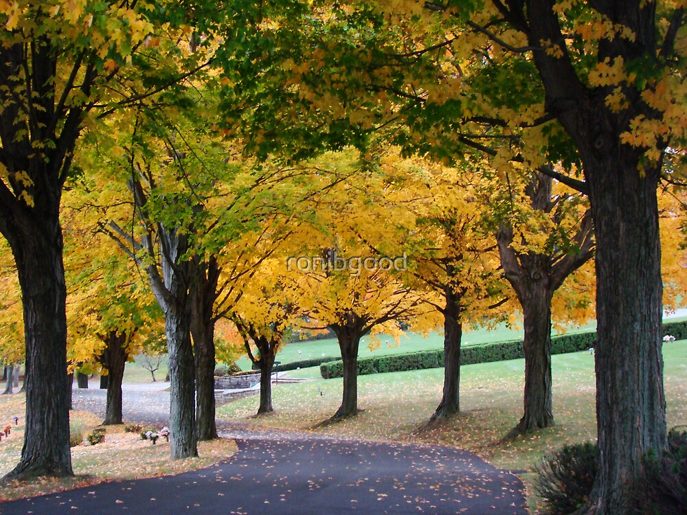 Road of Beauty by ronibgood
