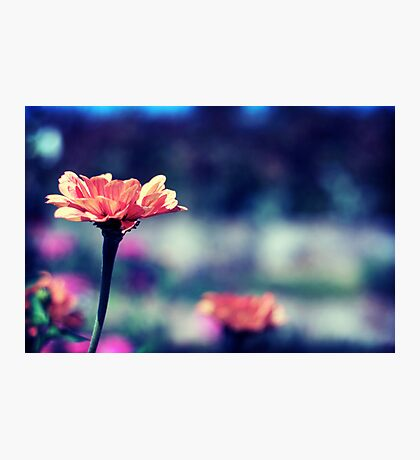 To Stand Out Photographic Print