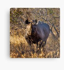 Black Rhino Metal Print