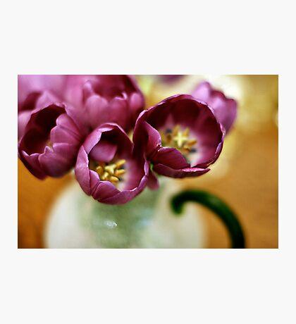 A Bouquet of Purple Photographic Print
