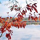 Crimson Leaves over Toccoa by Suzanne Gordan