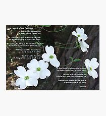 The legend of the dogwood Photographic Print
