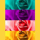Colorful Roses by JuliaFineArt